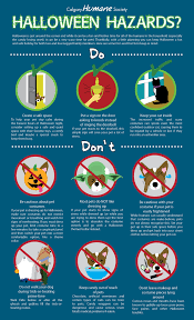 halloween safety tips halloween hazards safety tips for your pets