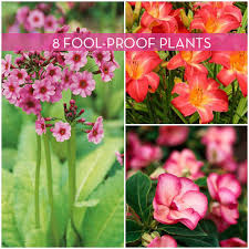 Indoor Plants That Don T Need Sun 8 Low Maintenance Outdoor Plants For The Busy Gardener Curbly