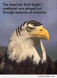 America Eagle Meme - eagle meme