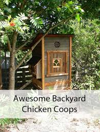 awesome backyard chicken coops mom prepares