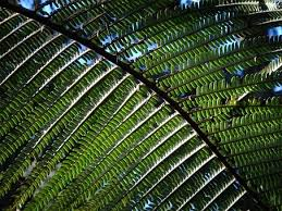 rainforest free pictures pixabay