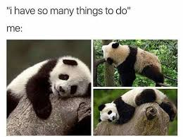Funny Panda Memes - 10 panda memes that are too relatable to people in newsweekly