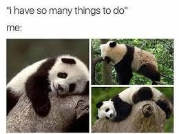 Panda Meme - 10 panda memes that are too relatable to people in newsweekly