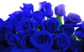 blue roses for sale sharonssupersecretedenblog a site