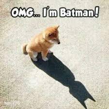 Pomeranian Meme - 26 why are you like this meme thinking meme