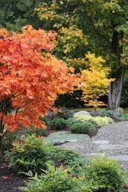 idee deco jardin japonais les 25 meilleures idées de la catégorie feuilles d u0027érable sur