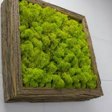 green moss frame water free green wall art moss and preserved