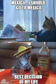 Newspaper Cat Meme - newspaper cat i should go to mexico humoar com