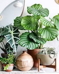 Best Plants For Bedroom Best 25 Plants Ideas On Pinterest Plants Indoor House Plants