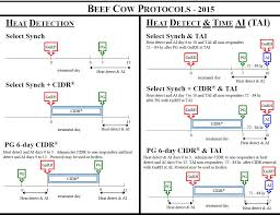 estrus synchronization considerations in beef herds announce