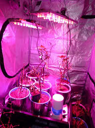 led growing lights by slashroot homemade led growing lights