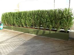 instant hedge privacy u0026 screening roof top gardens ideas