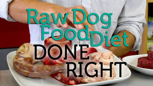 how to do the raw dog food diet right youtube