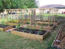 Best  Home Vegetable Garden Design Ideas On Pinterest Home - Backyard vineyard design