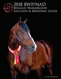 Beautiful Pics Of Bureau Vallee Les Herbiers 2018 Bwp Nad Belgian Warmblood Stallion Guide By Clsallee