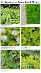 six chartreuse perennials and shrubs for your garden thinking