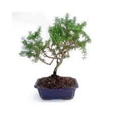 Christmas Plants Cheerful Plants For Christmas Living Plant Gifts Givingplants Com