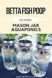 Grow Herbs Indoors by 3 Mason Jar Aquaponics Kit Build Your Own Hydroponics Herb