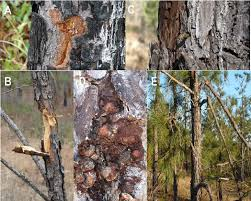 different types of tree damage caused by bullet strikes on fort