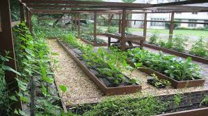 fabulous urban vegetable garden ideas backyard vegetable garden