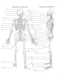 Anatomy And Physiology Online Quizzes Anatomy Labeling Worksheets Google Search I Heart Anatomy