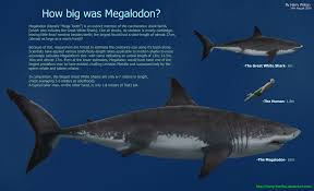 3 5 M To Feet Carcharocles Megalodon The Ultimate Marine Superpredator Album