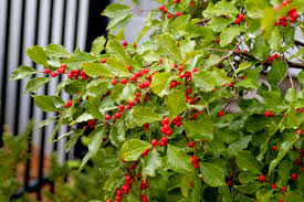i m overwhelmed looking for deer resistant plants trees for