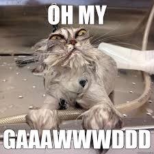 Wet Meme - oh my gaaawwwddd wet cat quickmeme