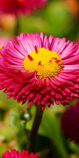 Beautiful Flower Pictures 283 Best Beautiful Flowers Wallpapers Pictures Pc Full Hd