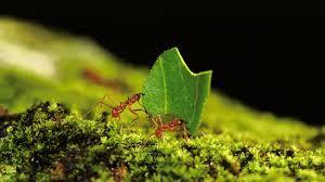 ant san diego zoo animals u0026 plants