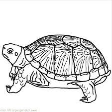 100 turtle template fish templates printable virtren com free