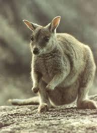 ABC DE ANIMALES Images?q=tbn:ANd9GcRqEh26gRvwcgnFa5N7Nj5qbdhHafG8EG1bwJ2j9axGQxsjp2CK