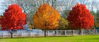 fall england ridgefield ct