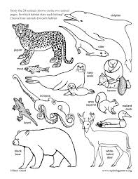 coloring pages of animals in their habitats animals in their habitat model making 2nd 4th grade