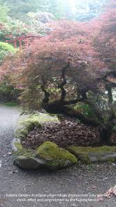 Rock Garden South by 389 Best Japanese Dry Garden Ideas Images On Pinterest Japanese