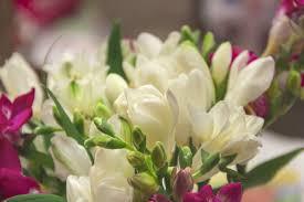 freesia flower freesia flower meaning flower meaning