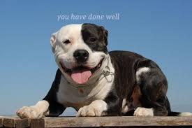 Uplifting Memes - uplifting pitbull dogs know your meme