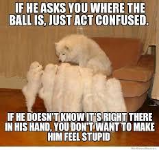 Confused Dog Meme - storytelling dog meme weknowmemes