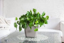 plant for office nyc office plant delivery service