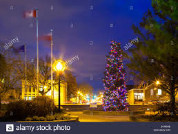 a very large christmas tree blue spruce covered in lights in