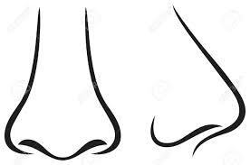 nose clipart images clipartxtras