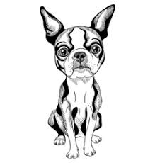 sketch dog beagle breed sitting royalty free vector image