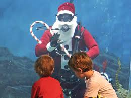 Connecticut snorkeling images Shark diving santa jpg