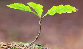 bucketlist plant a tree official list