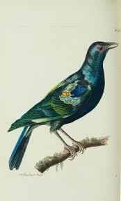 296 best bird art images on pinterest bird art bird prints and