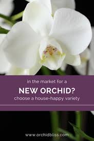 Happy In Your Home House Happy Orchids Will Thrive In Your Home No Greenhouse Needed
