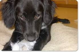 help i need an indestructible dog bed