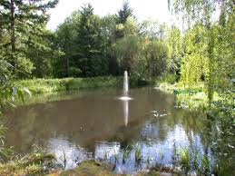 Catfish Backyard Pond by Logan Yard Pond Fountain Jpg