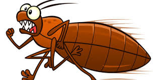 Dont Let The Bed Bugs Bite 5 Bed Bug Myths Debunked Plunkett U0027s Pest Control