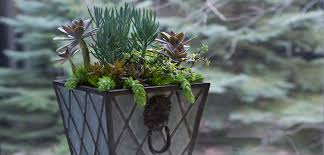 Plant Combination Ideas For Container Gardens Planting Succulents Container Garden Ideas Bombay Outdoors